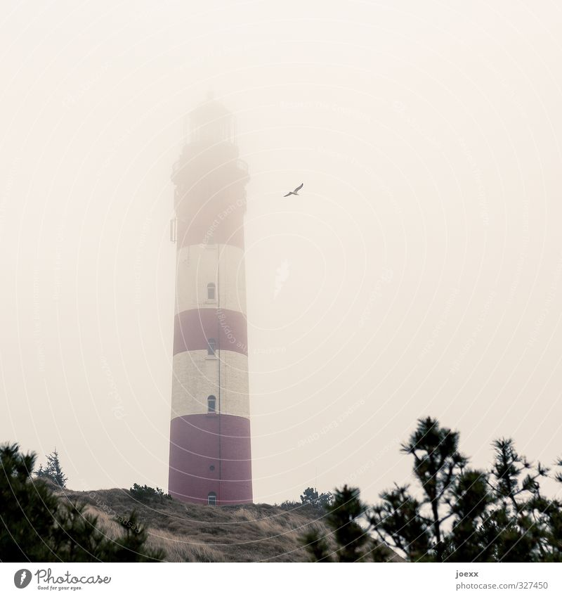 Old White Red Animal Clouds Black Yellow Air Bird Flying Fog Island Seagull Lighthouse Bad weather Amrum