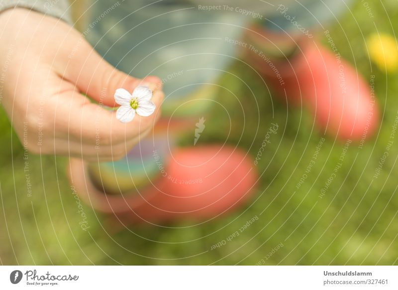 Human being Green Beautiful Summer Flower Hand Red Yellow Emotions Spring Meadow Grass Happy Small Friendship Birthday