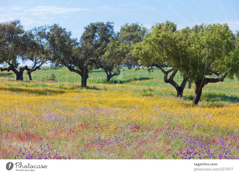 Portugal Algarve Tree Meadow Flower meadow Field Blossoming Multicoloured Landscape Vacation & Travel Travel photography Idyll Card Tourism Paradise Heavenly
