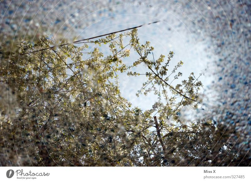 mirrors Water Weather Bad weather Rain Blossom Blossoming Spring day April April weather Cherry blossom Colour photo Pattern Deserted Morning Reflection