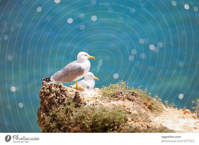 Nature Vacation & Travel Water Ocean Calm Freedom Coast Travel photography Rock Bird Glittering Idyll Card Heavenly Seagull Portugal
