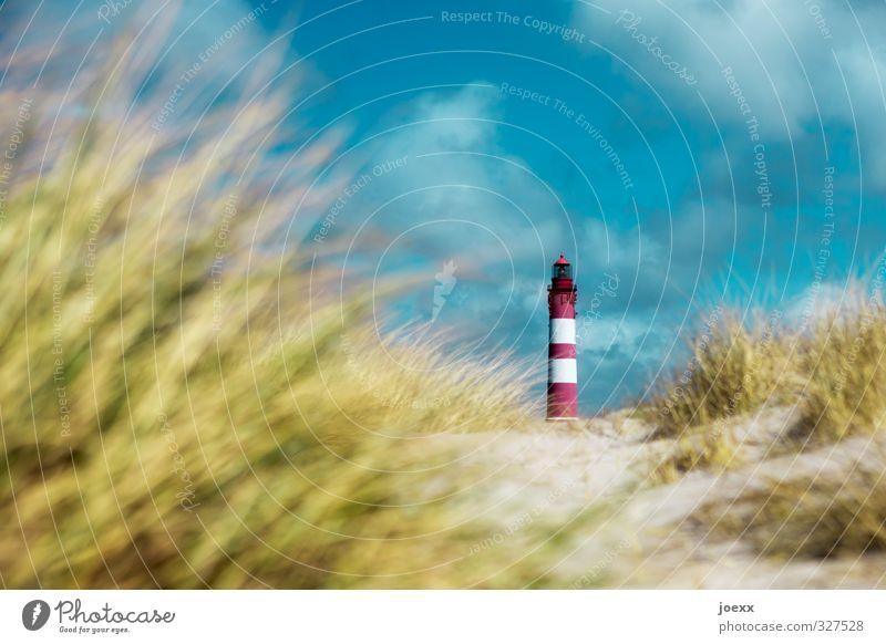 focus Nature Landscape Beautiful weather Hill Coast North Sea Marram grass Lighthouse Old Calm Considerate Idyll Colour photo Multicoloured Exterior shot