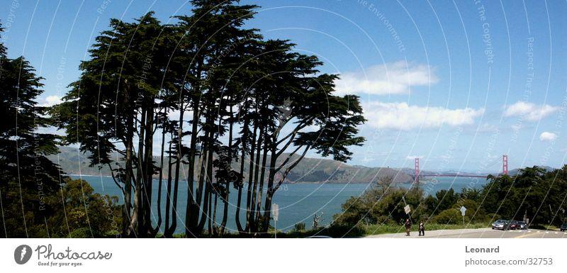 Human being Sky Tree Clouds Large Bridge USA Vantage point Americas Bay San Francisco Golden Gate Bridge San Francisco bay