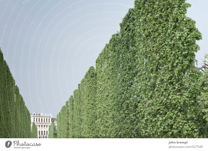off through the hedge Hedge Park Vienna Town Capital city Stand Esthetic Historic Tall Green Safety Protection Diligent Disciplined Orderliness Elegant Idyll