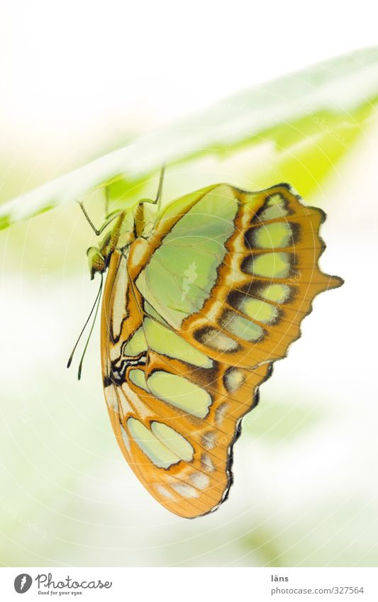 chill out area Plant Animal Leaf Butterfly Wing Zoo 1 Hang Esthetic Exceptional Under Brown Yellow Green Uniqueness Relaxation Feeler Delicate Light green Rest
