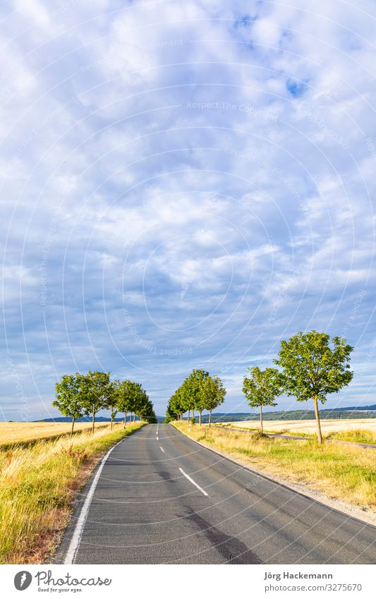scenic alley road with green trees in sunset Sky Vacation & Travel Nature Landscape Tree Street Germany Moody Alley