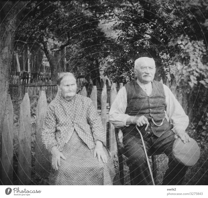 Woman Human being Man Old Tree Calm Senior citizen Family & Relations Couple Garden Together Friendship Contentment Sit Observe Past