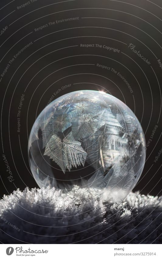 Crystal on crystal Life Harmonious Calm Winter Ice Frost Snow Ice crystal Exceptional Dark Thin Authentic Elegant Fantastic Gigantic Cold Natural Round Power