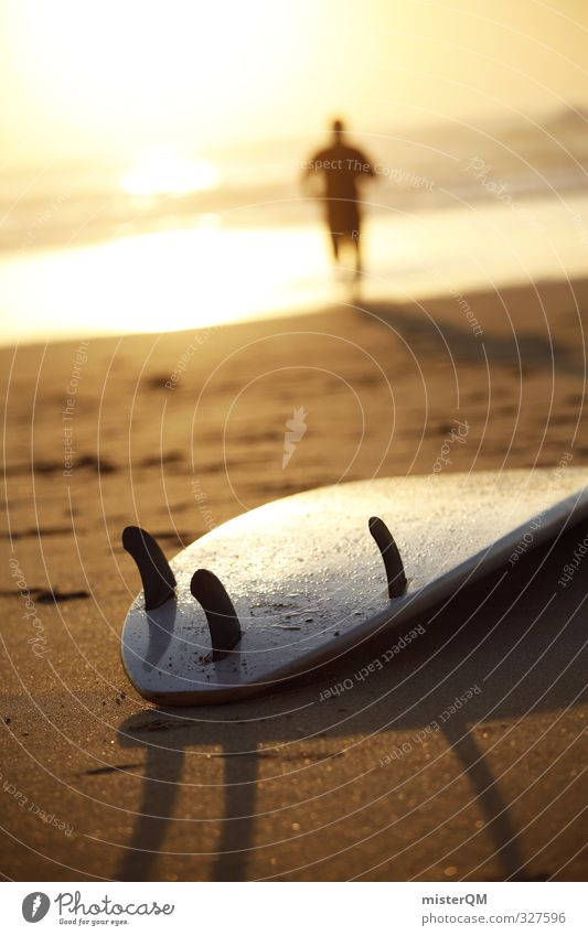 Back to Board. Lifestyle Elegant Style Joy Leisure and hobbies Art Esthetic Contentment Surfing Surfer Surfboard Surf school Extreme sports Aquatics