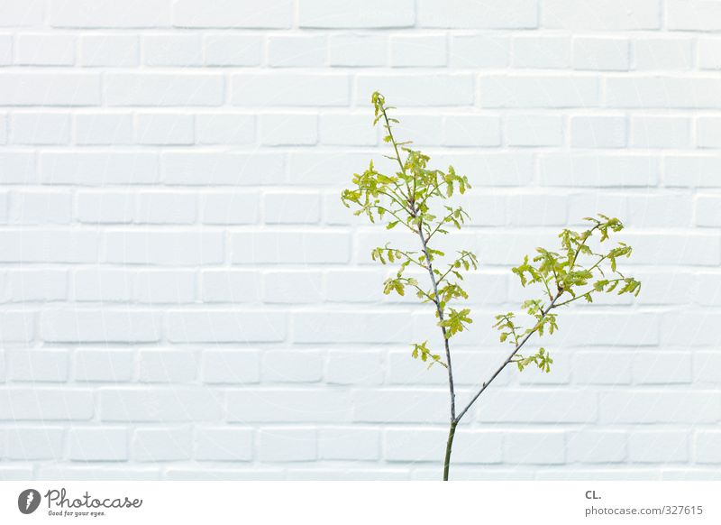 nature Environment Nature Spring Plant Leaf Garden Park Wall (barrier) Wall (building) Blossoming Growth Simple Town Green White Branch Twig Make green 1