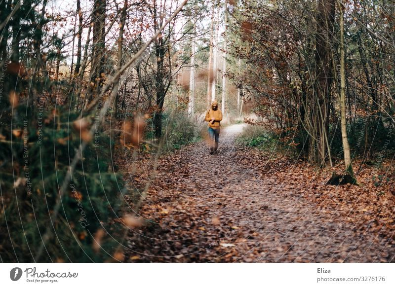 A man walks along an autumnal forest path Forest stroll To go for a walk Man Autumn Nature Hiking Landscape Lanes & trails Trip Relaxation trees Autumnal