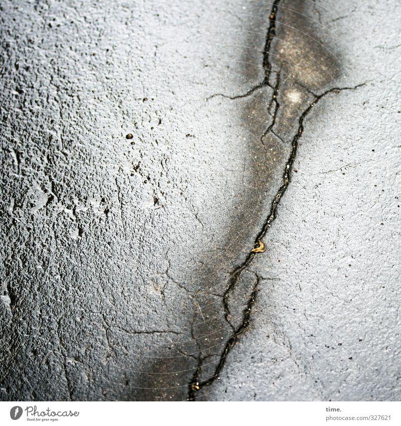everything must go Transport Street Lanes & trails Asphalt Tar Crack & Rip & Tear Elephant Glittering Wet Gray Pain Poverty Movement Bizarre Inspiration Protest