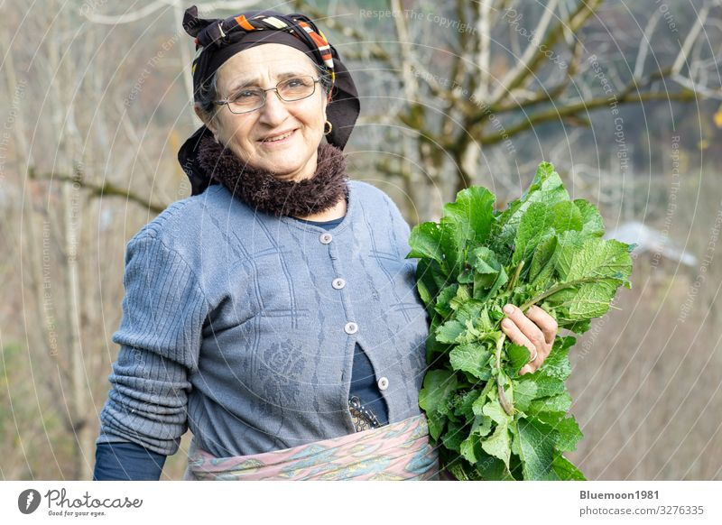 Portrait of an elderly woman picking some of fresh herbal vegetables from garden, Vegetable Nutrition Organic produce Vegetarian diet Diet Lifestyle Style