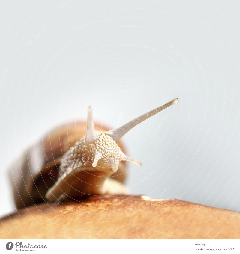 Soooo slimy ... Animal Wild animal Snail Animal face Vineyard snail 1 Observe Movement Discover Authentic Simple Disgust Creepy Naked Natural Curiosity Slimy