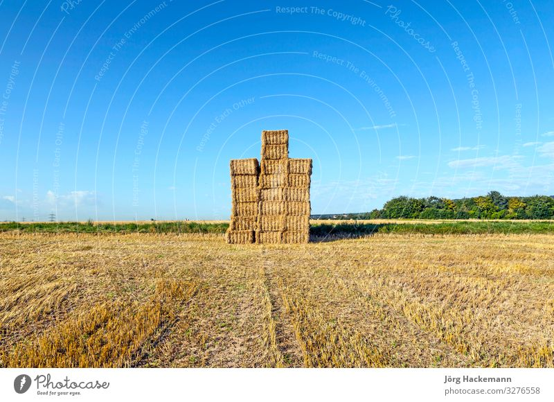 Hay bales in a field after the fresh harvest under blue sky Summer Sun Industry Nature Landscape Sky Autumn Meadow Natural Blue Brown Yellow Gold Food