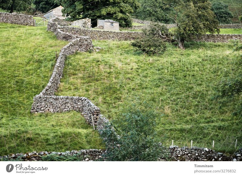 Dry Stone Walls Vacation & Travel Environment Landscape Plant Tree Grass Bushes Meadow Yorkshire Great Britain Building Lanes & trails Simple Natural Gray Green