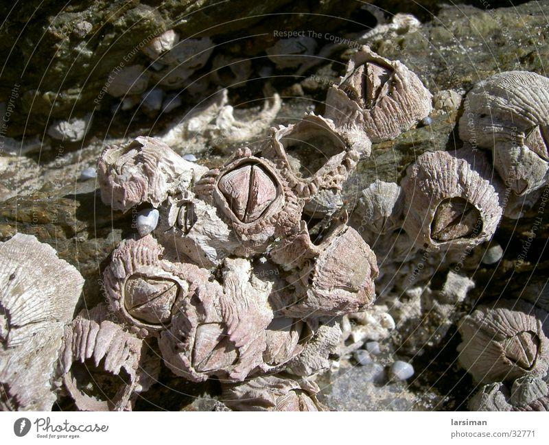 Muschelnaustralia Mussel Australia Beach
