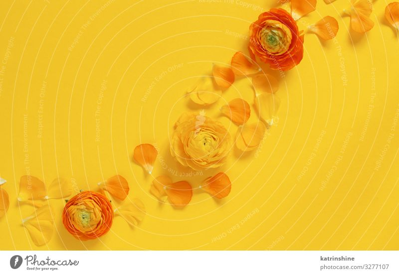 Yellow flowers and petals on a yellow background Design Decoration Wedding Woman Adults Mother Flower Rose Bright Creativity romantic orange ranunculus