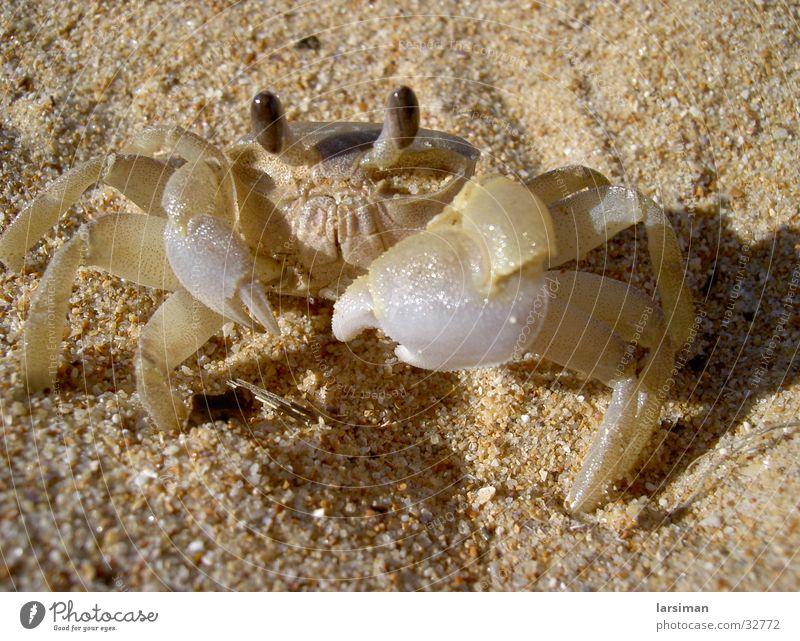 crayfish Australia Beach Shellfish