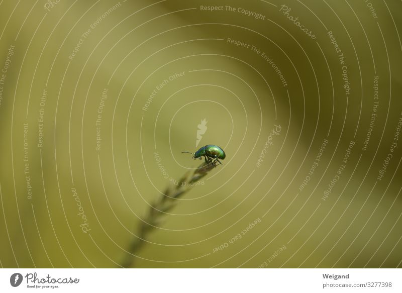 bug Environment Nature Animal Wild animal Beetle 1 Sit Freedom Joy Happy Congratulations Birthday Thank you very much Insect Colour photo Shallow depth of field
