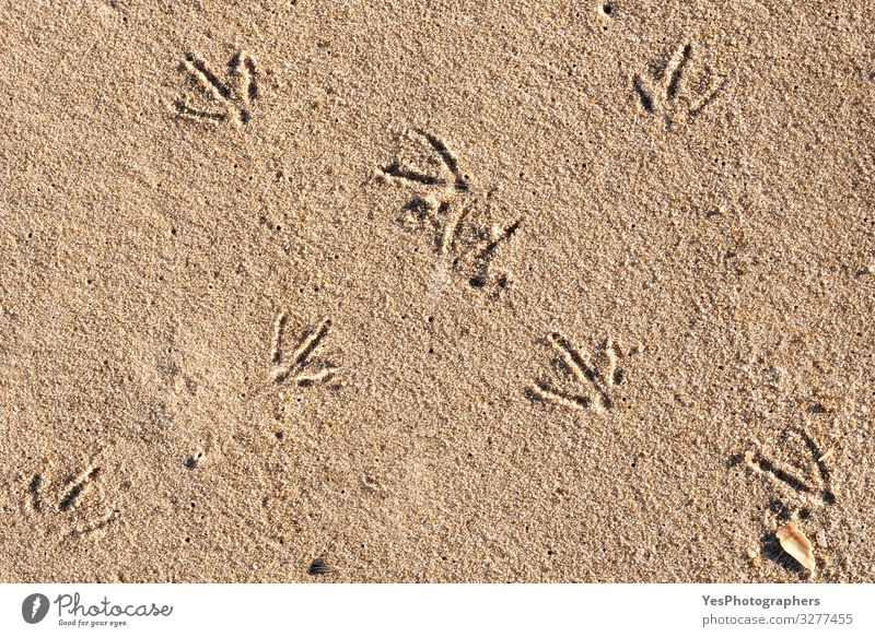 Bird footprints on sand on sunny day. Beach day and bird tracks Vacation & Travel Summer Summer vacation Sand Climate change Beautiful weather North Sea Natural