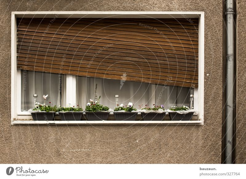 White Plant Flower House (Residential Structure) Window Wall (building) Wall (barrier) Wood Building Blossom Stone Metal Brown Facade Flat (apartment)