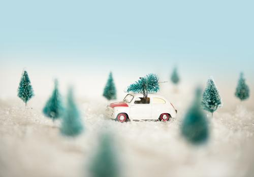 Driving Home for Christmas Tree Lifestyle Shopping Style Joy Leisure and hobbies Feasts & Celebrations Christmas & Advent New Year's Eve Environment Nature
