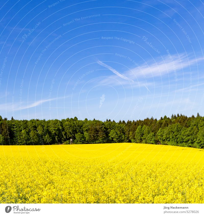 Spring countryside of yellow rapeseed fields in bloom Vacation & Travel Summer Nature Jump Yellow agriculture Background picture beautiful crop Europe European