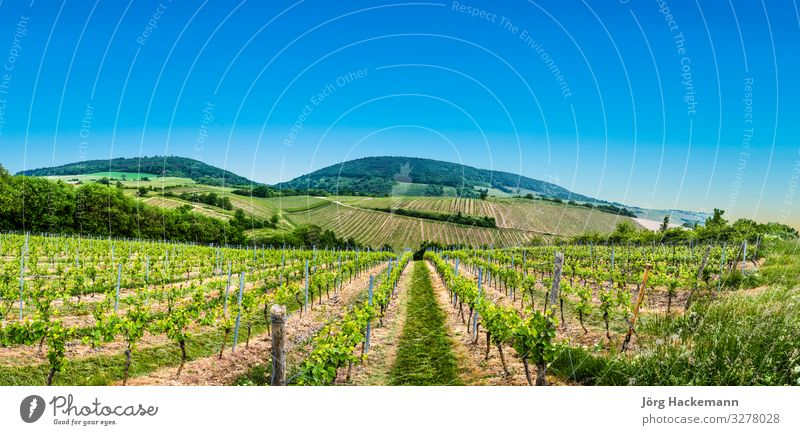 view of vineyard in spring time Nature Flag Jump Bingen Muenster-Sarsheim agriculture area cloudy electricity environment field Germany grapes green growing