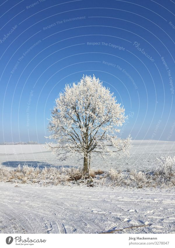 tree in hoar frost Winter Snow Landscape Sky Weather Tree Blue White Cold Frankenhausen ICE bad field Frost Germany Rural Seasons Symbols and metaphors