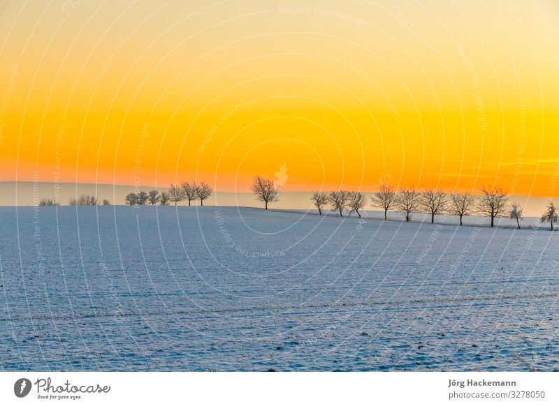 winter landscape with tree alley in sunset Harmonious Winter Snow Landscape Sky Horizon Weather Tree Soft Blue White Emotions Loneliness Bad Frankenhausen Cold