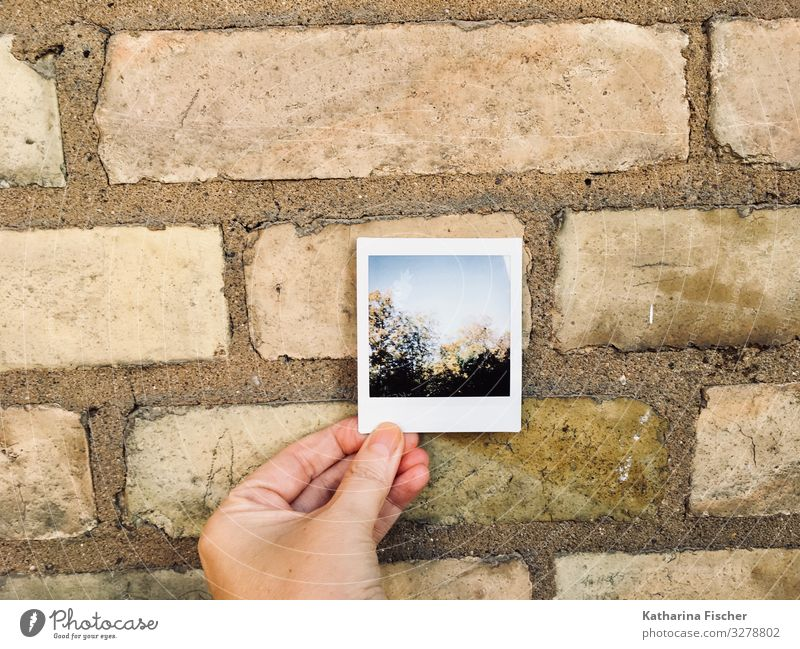 Polaroid Environment Nature Spring Summer Autumn Winter Tree Forest Manmade structures Wall (barrier) Wall (building) Facade Stone Brown Yellow Green Black