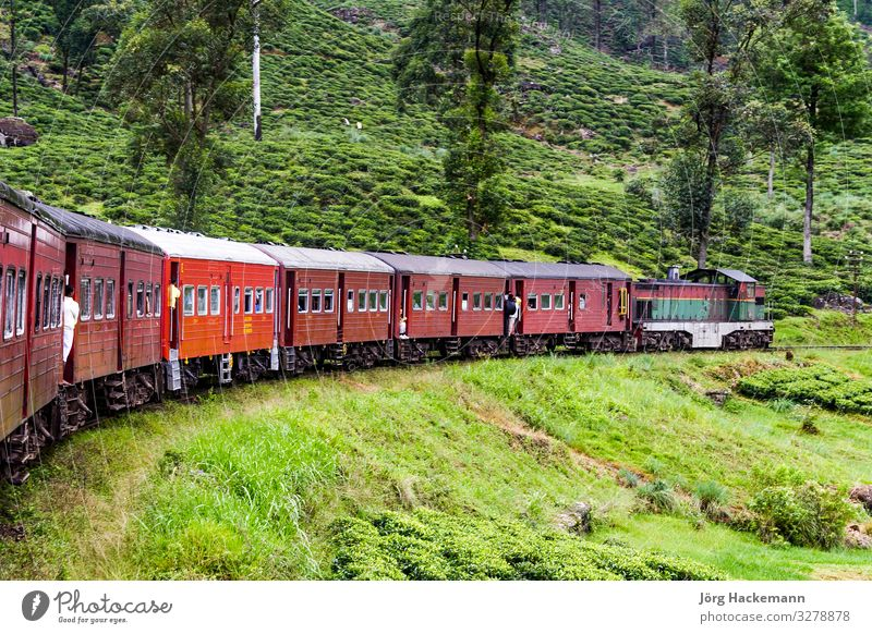 riding by train the scenic mountain track in Sri Lanka Vacation & Travel Trip Mountain Tree Grass Forest Virgin forest Transport Railroad Metal Steel Old