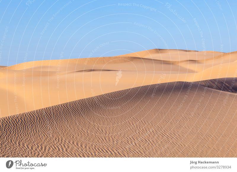 sand dune in sunrise in the sonoran desert Beautiful Sun Nature Landscape Sand Sky Wind Warmth Hot Blue Yellow Arizona Beauty Photography USA Africa african