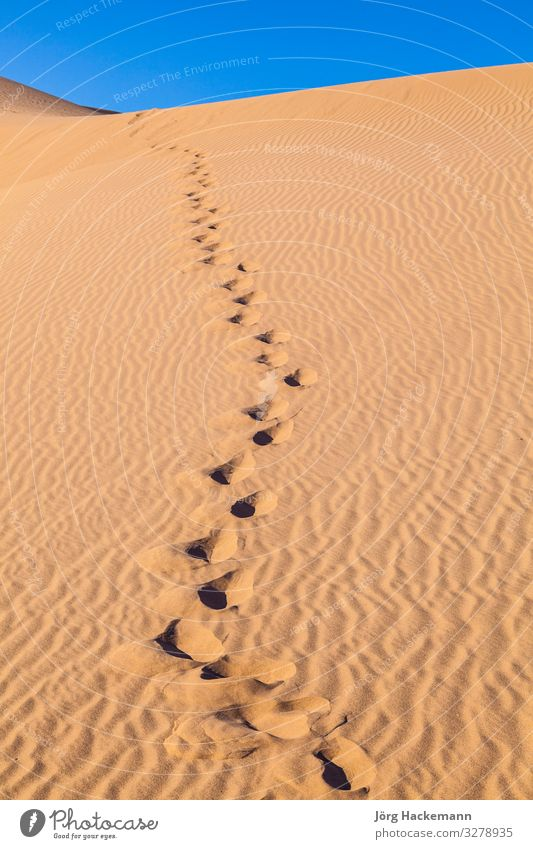 sand dune in sunrise in desert with human footsteps Beautiful Vacation & Travel Adventure Safari Sun Human being Nature Landscape Sand Sky Wind Warmth Footprint