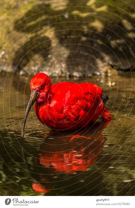 Nature Water Red Animal Natural Exceptional Lake Bird Trip Wild Illuminate Elegant Wild animal Adventure Wet Wing