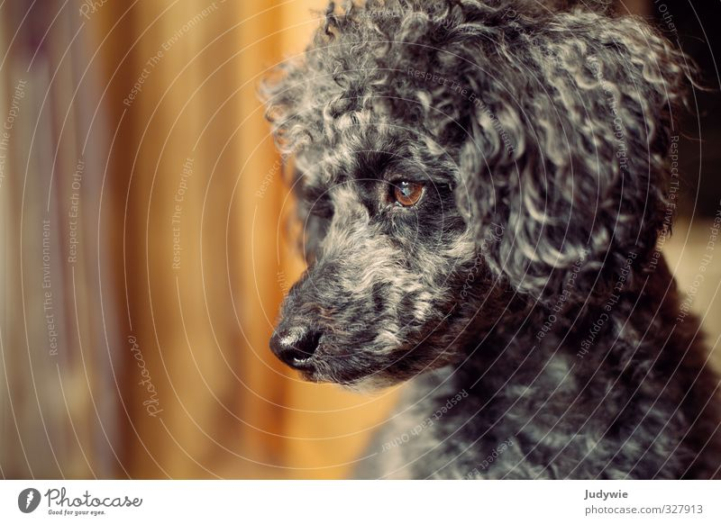 Dog Loneliness Calm Animal Black Sadness Car Window Think Moody Orange Room Wait Curiosity Longing Deep Animal face