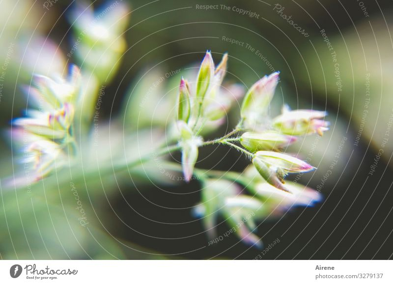 something is always in bloom Grass Blossom bud Plant Small Delicate Graceful youthful New Nature Deserted blurred Unclear indistinct Vague Green White purple