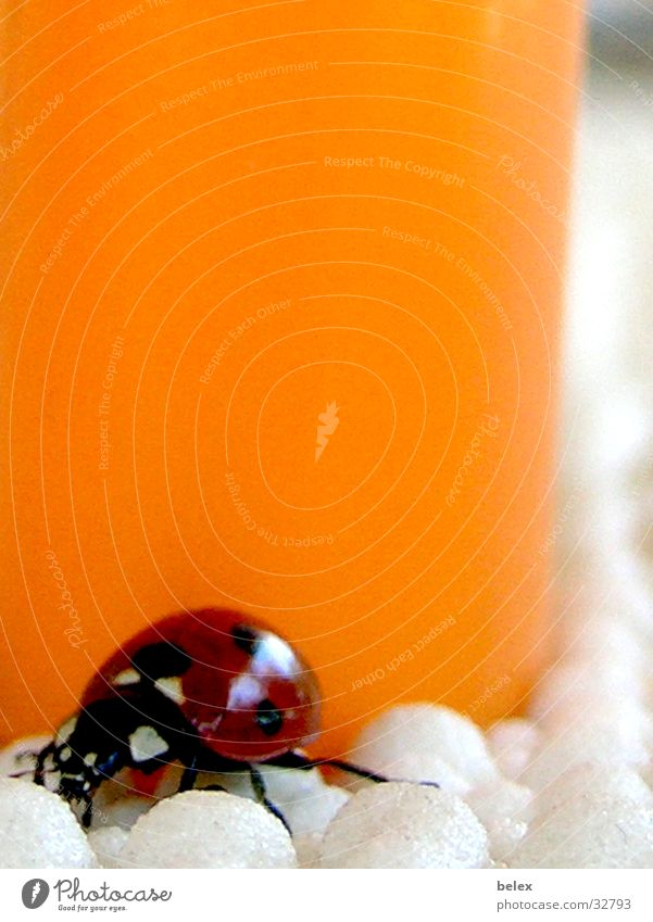 Red Loneliness Animal Colour Orange Flying Search Insect Point Hide Patch Ladybird Beetle Crawl Lighter