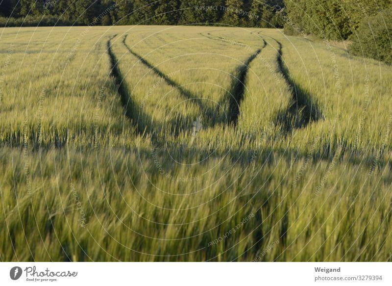 routes Meadow Field Sadness 2 Divorce Decide Lanes & trails Grain Barley Agriculture Colour photo Exterior shot Deserted Copy Space bottom