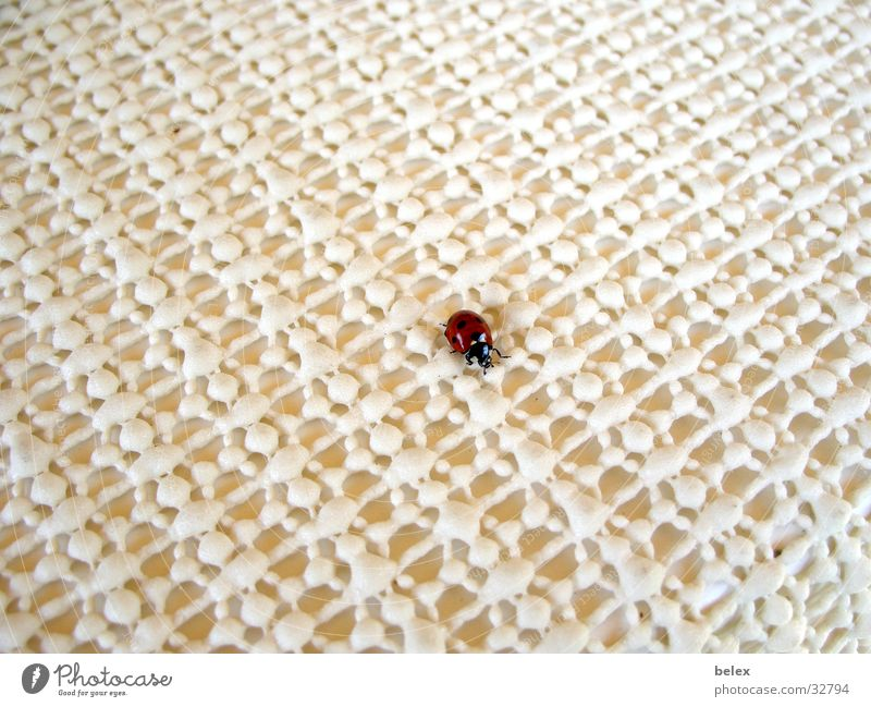 lonely ladybug Ladybird Insect Animal Red White Loneliness Search Pattern Crawl Beetle Flying Structures and shapes Patch Point Tablecloth
