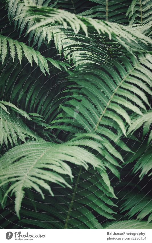 Ferns Environment Nature Plant Foliage plant Wild plant Forest Deserted Esthetic Dark Natural Point Green Fern leaf Fresh Botany Organic Colour photo