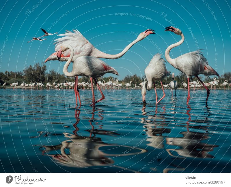 Sky Vacation & Travel Nature Water Landscape Ocean Animal Environment Natural Coast Tourism Bird Wild animal Group of animals Adventure Authentic