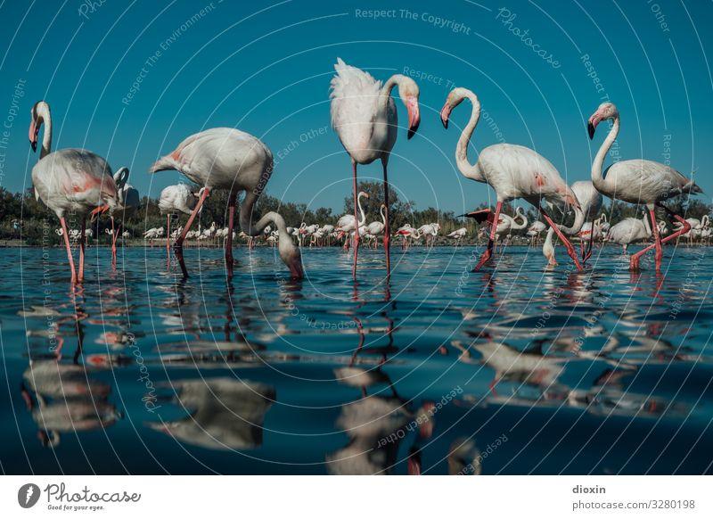 Flamingo Lagoon [2] Environment Nature Landscape Animal Water Sky Cloudless sky Weather Beautiful weather Waves Coast Bay Ocean Wild animal Bird
