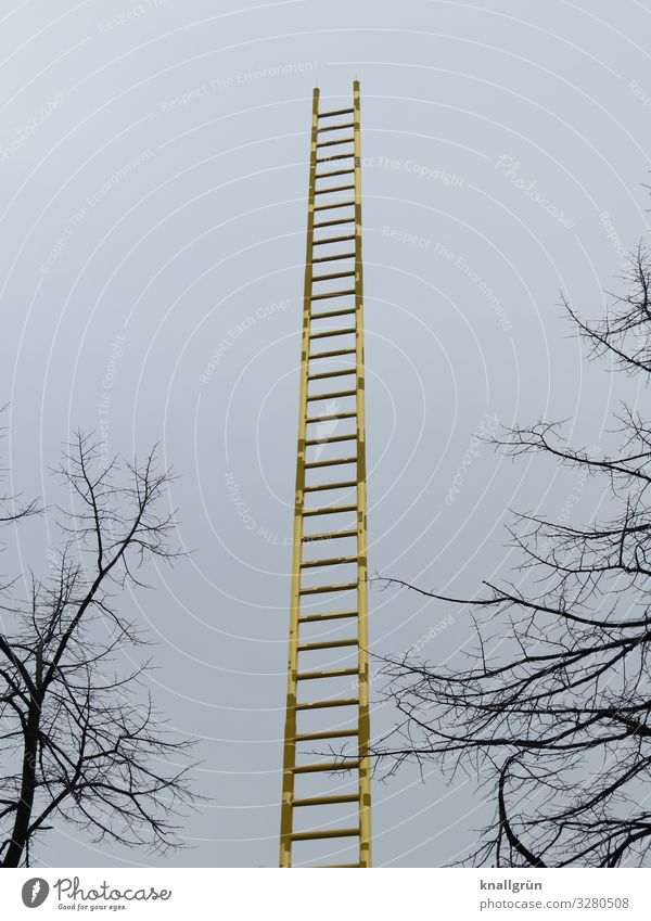 ladder to heaven Sky Winter Plant Tree Ladder Glittering Tall Blue Brown Gold golden ladder Colour photo Exterior shot Deserted Copy Space left Copy Space right