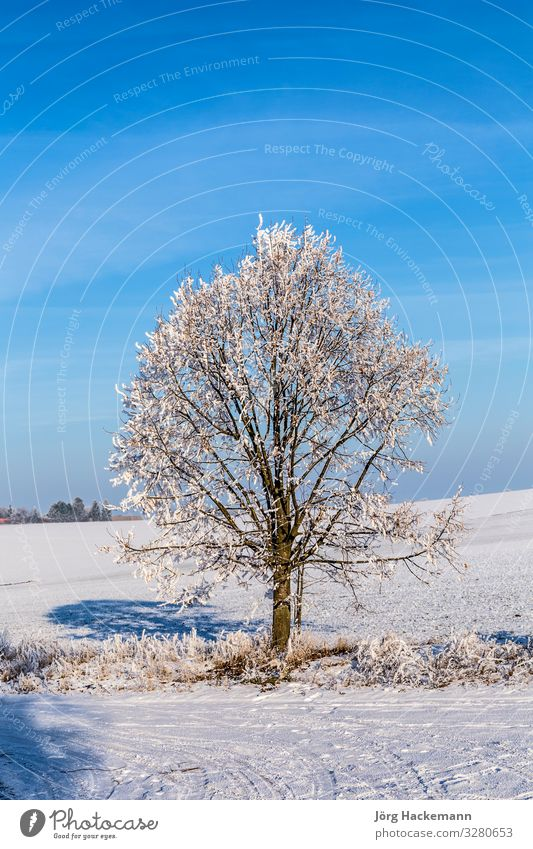 white icy trees in snow covered landscape Harmonious Winter Snow Landscape Sky Weather Tree Old Blue White Emotions Loneliness Bad Frankenhausen Cold ICE field