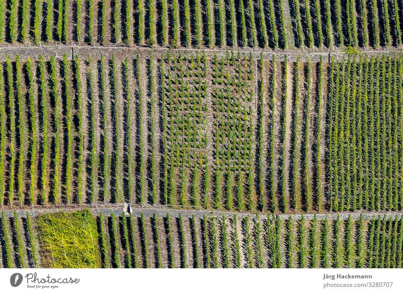 green vineyards called Trittenheimer Apotheke at river Moselle Vacation & Travel Summer Sun Nature Landscape Plant Leaf Green Moody Beauty Photography Europe