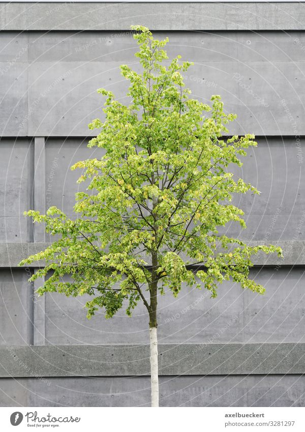 Tree in front of concrete facade Design Environment Nature Plant House (Residential Structure) Building Architecture Wall (barrier) Wall (building) Facade Gray