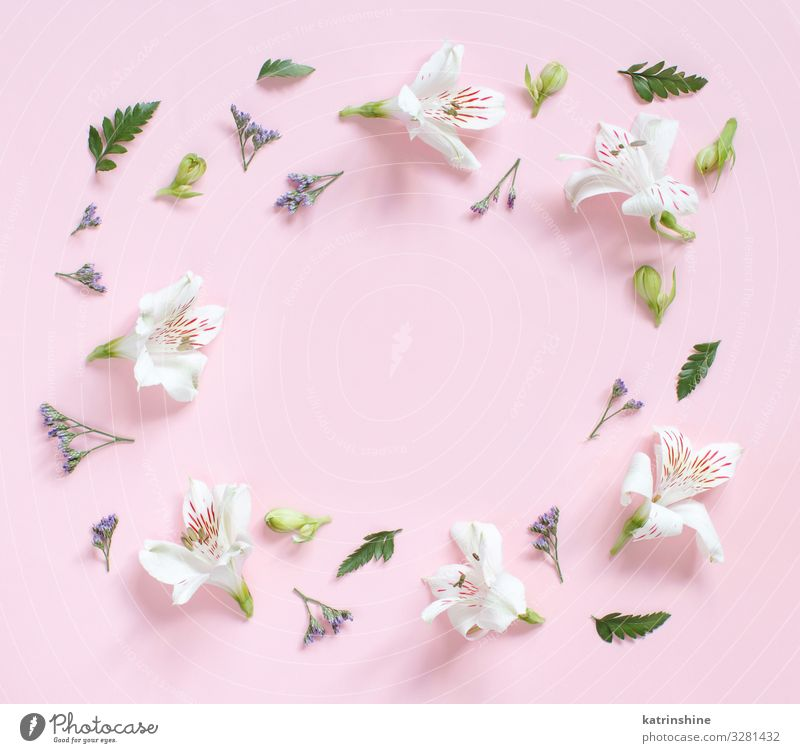 Flowers and petals on a light pink background Design Decoration Valentine's Day Mother's Day Wedding Birthday Woman Adults Leaf Above Pink White Creativity