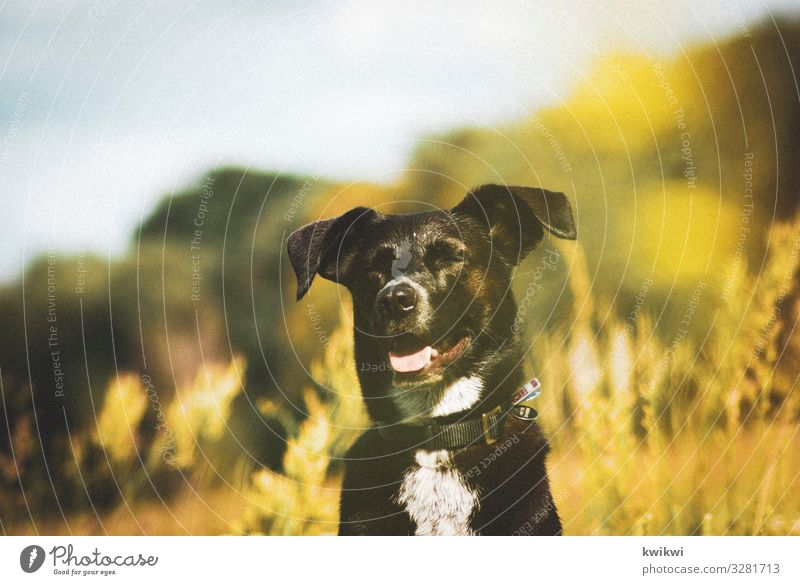 Dog on meadow II Environment Nature Landscape Plant Sunlight Spring Summer Autumn Beautiful weather Flower Grass Bushes Leaf Blossom Foliage plant Wild plant